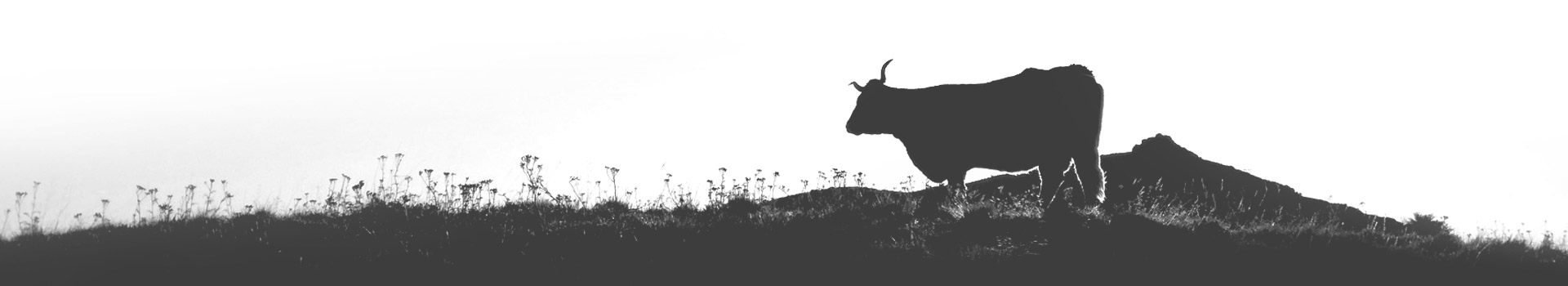 Illustration vache - Serious game AEOLE