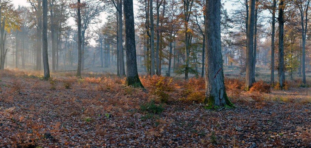 Forêt et bocage bourbonnais